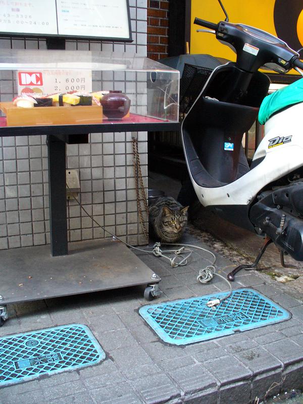 店先のキジトラ猫1