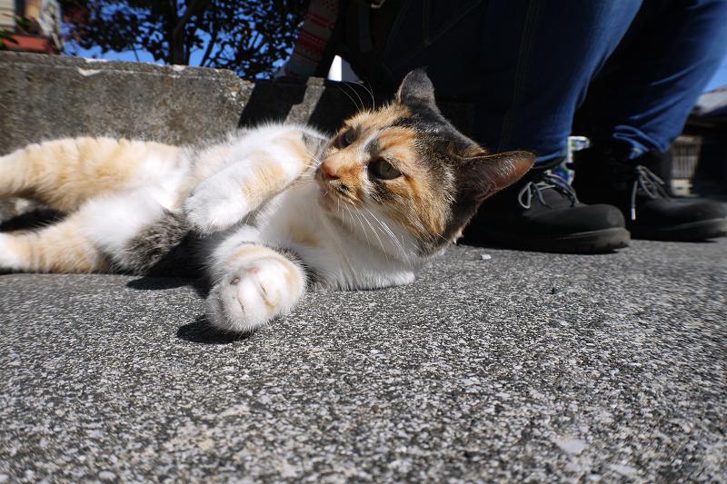 足を握られた三毛猫1