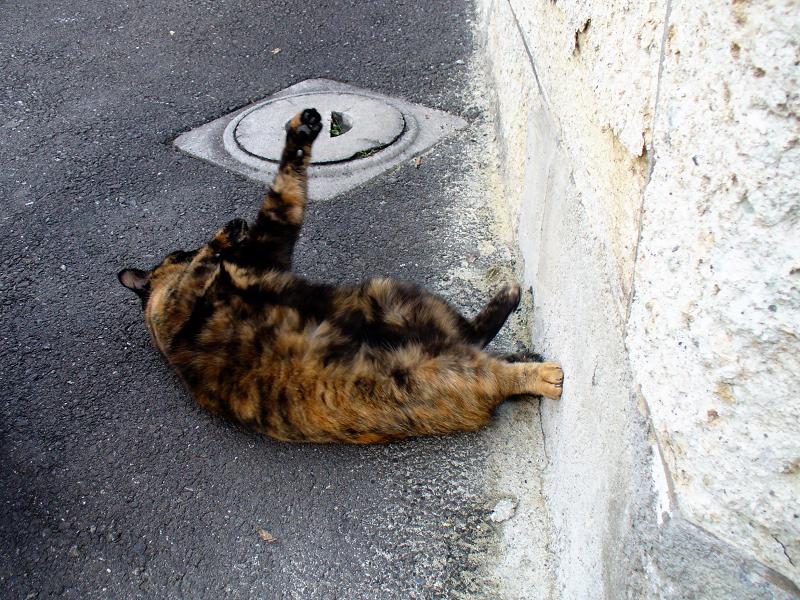 塀の下で転がったサビ柄猫2