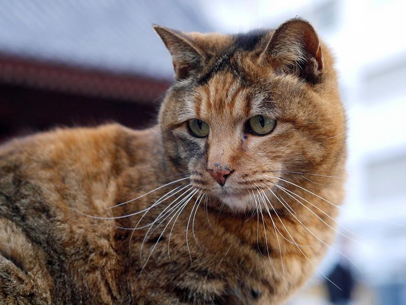 ベンチに乗ってるサビ柄猫2