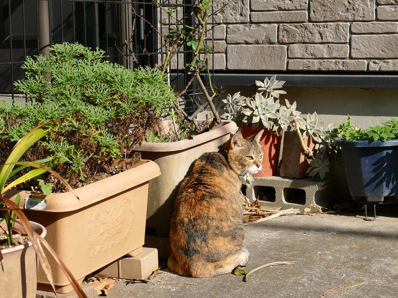 植木と三毛猫1