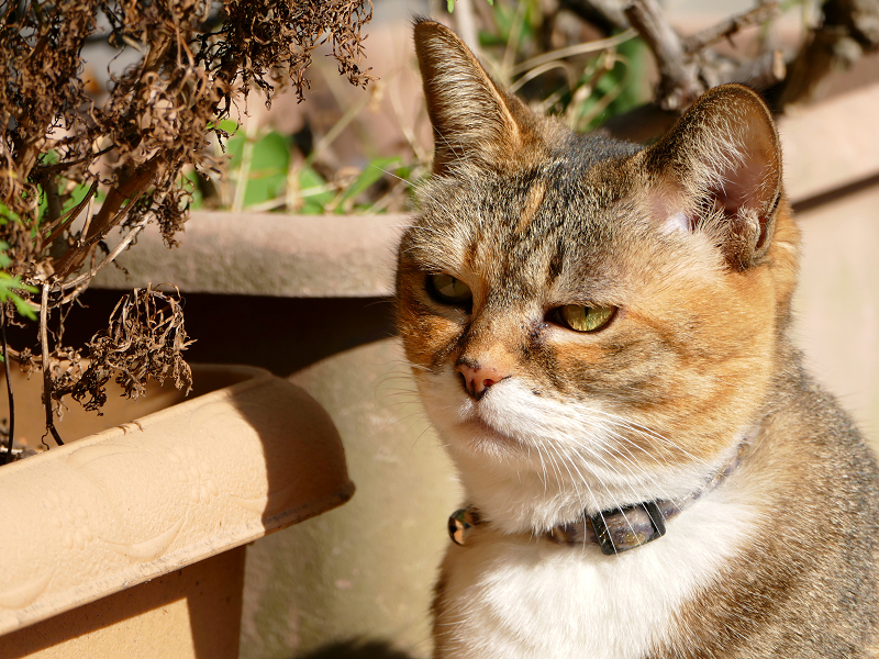 植木と三毛猫2