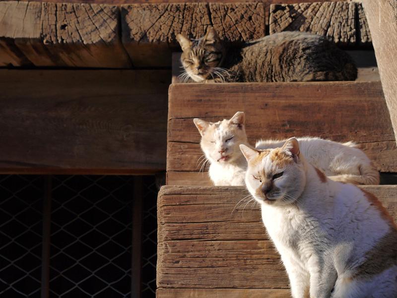 階段の橋に並ぶ猫3匹1