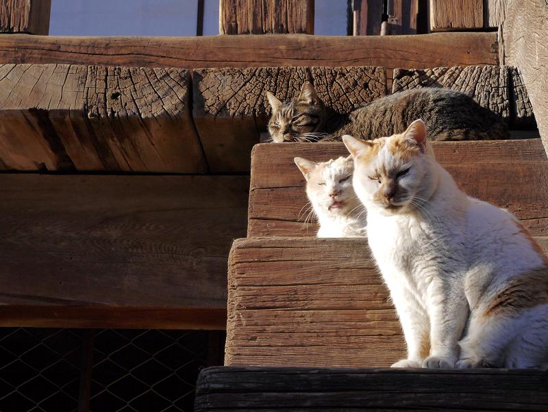 階段の橋に並ぶ猫3匹2
