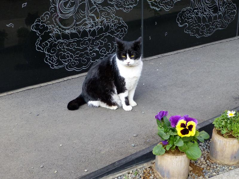 黒御影石スロープの黒白猫