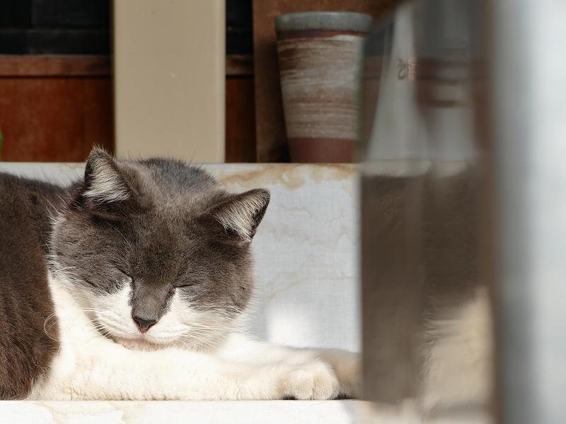 祠で目を開けるグレー白猫1