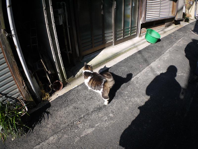 細い路地の毛長キジ白猫2