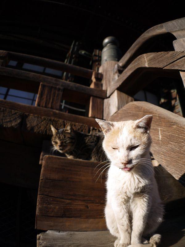 階段の端に並ぶ猫2匹1