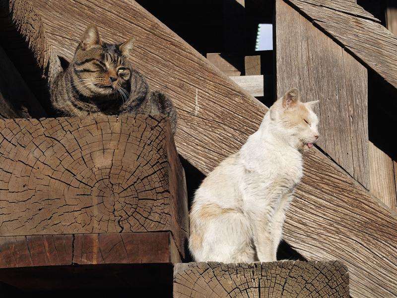 階段の端に並ぶ猫2匹2