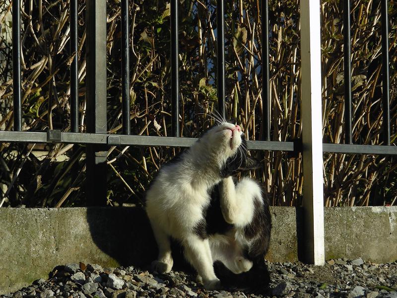 高速カキカキ黒白猫2