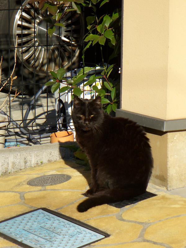 風水カラーと黒猫2