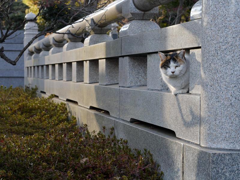 石玉垣と三毛猫1
