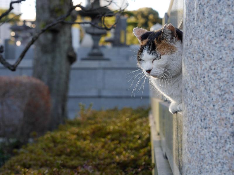 石玉垣と三毛猫2