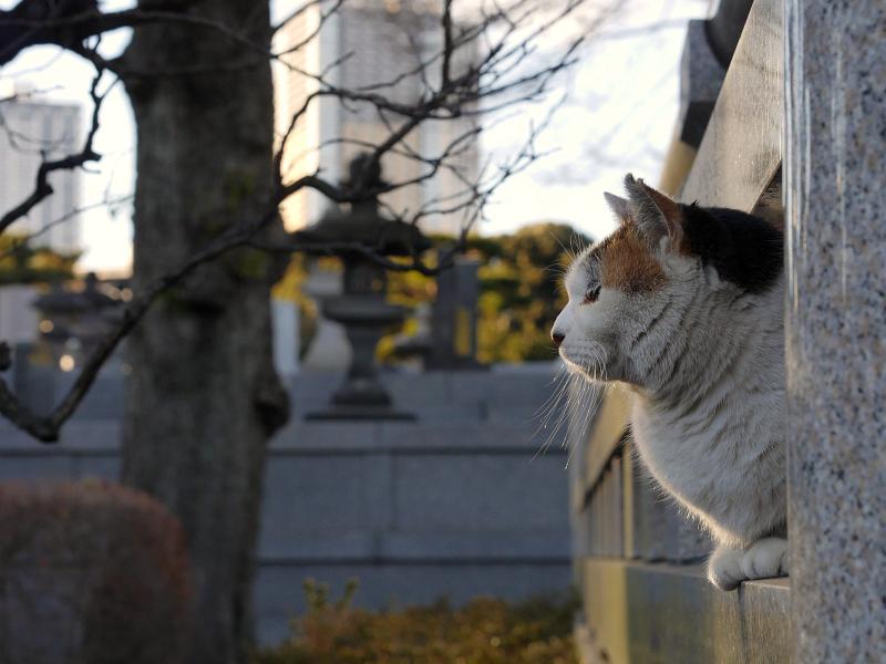 石玉垣と三毛猫3