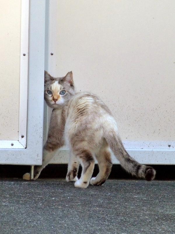 門を入ろうとしてる猫2