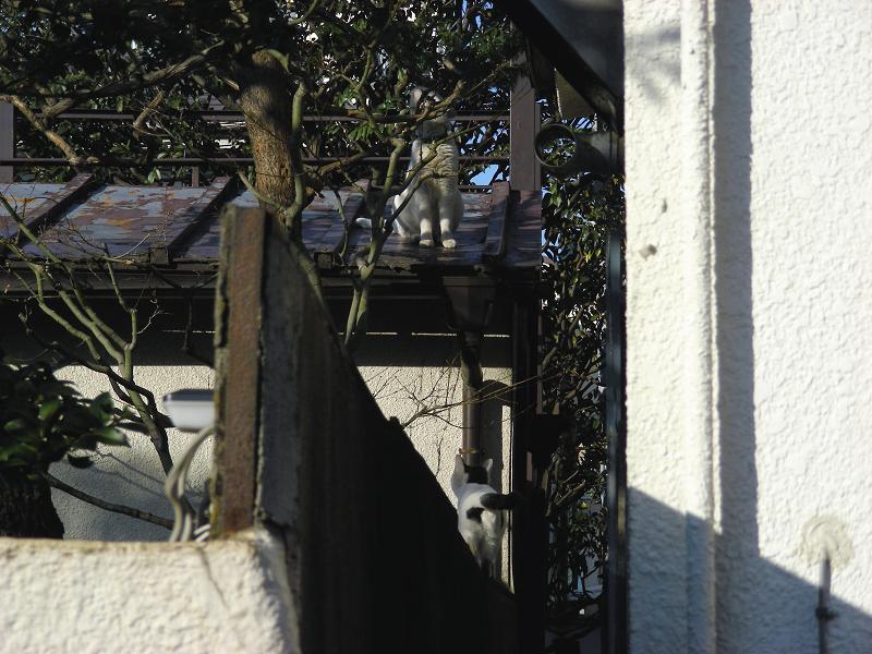 屋根に登る猫1