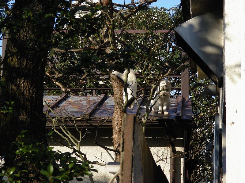 屋根に登る猫2