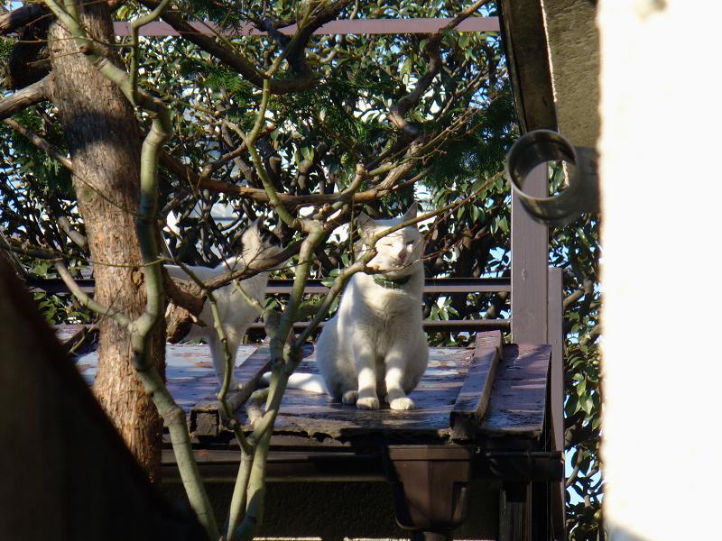 屋根に登る猫3