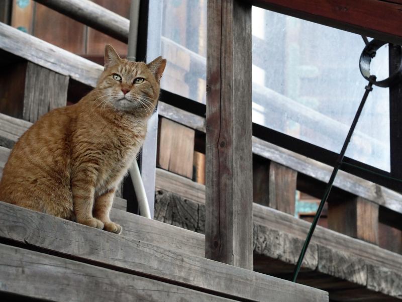 階段にいる茶トラ猫