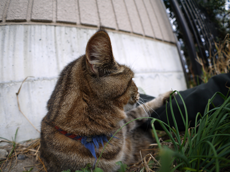 猫スペースのキジ白猫2