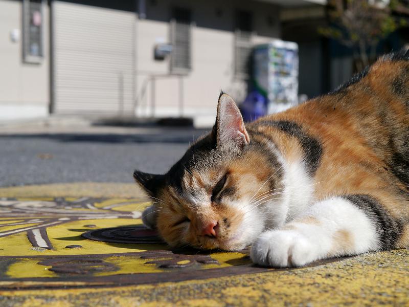 マンホール上の三毛猫2