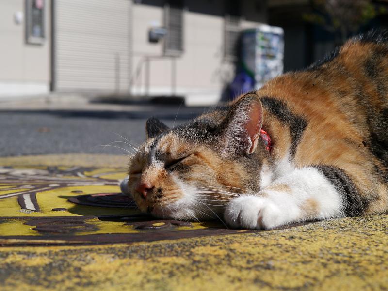 マンホール上の三毛猫3