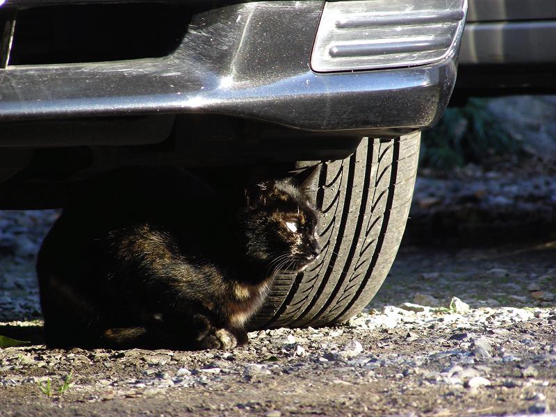 タイヤの横の黒猫