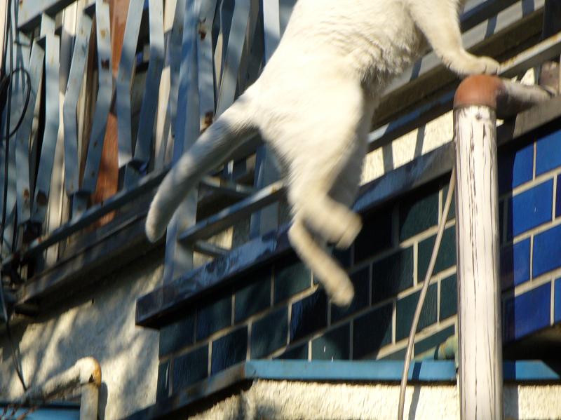 家に入る白猫3