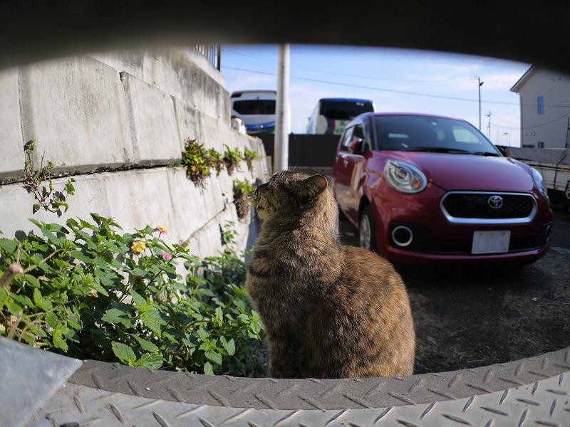 上を見ているサビ柄猫1