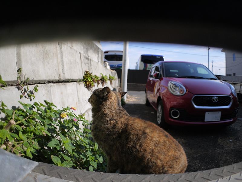 上を見ているサビ柄猫2
