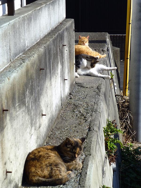 隙間に登ったサビ柄猫