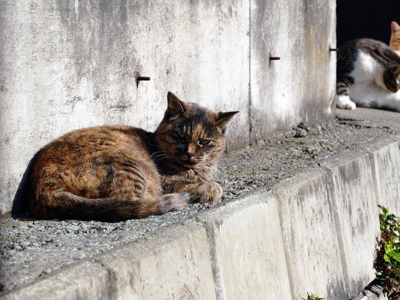 隙間スペースの猫たち1