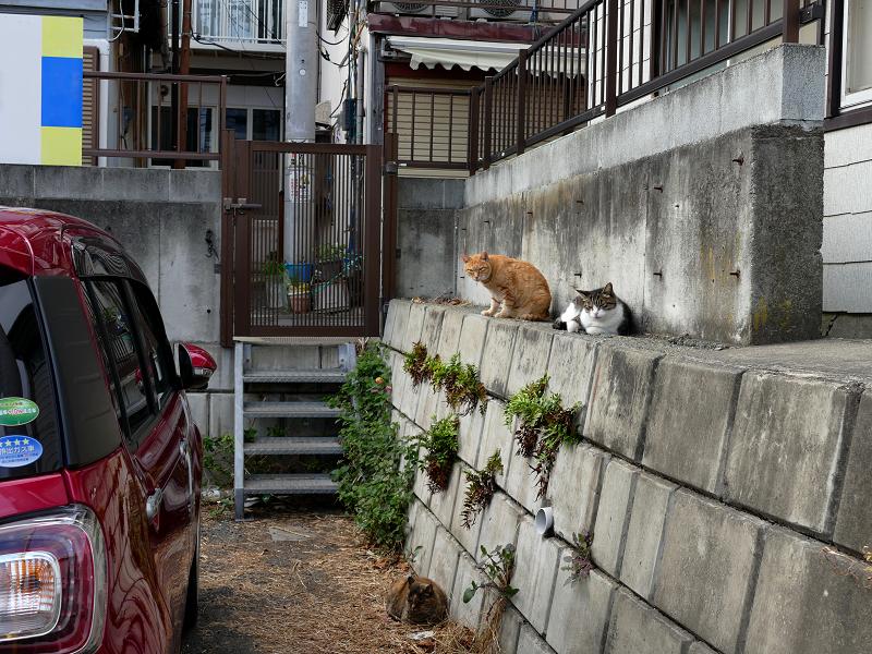 猫駐車場の猫たち1