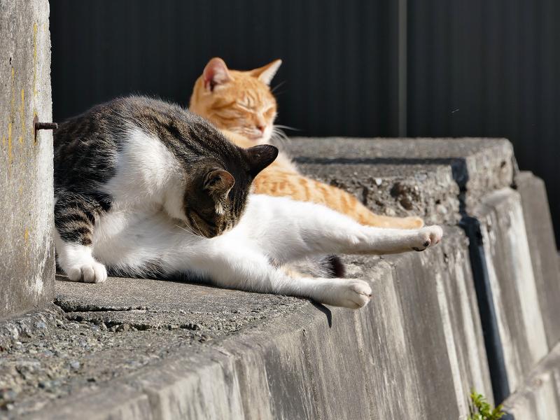 隙間スペースの猫たち2
