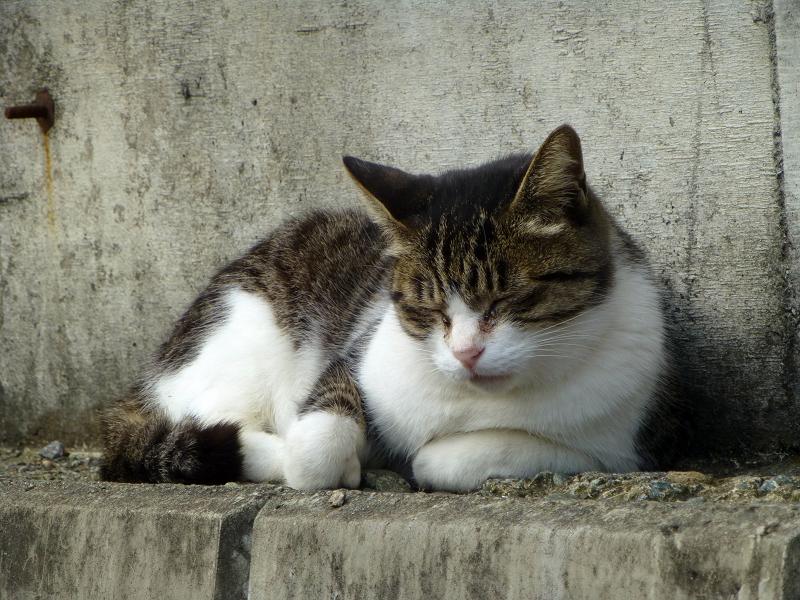 猫駐車場の猫たち3