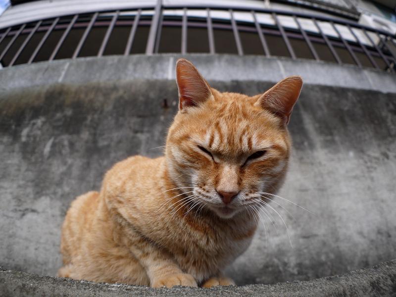 猫駐車場の猫たち4