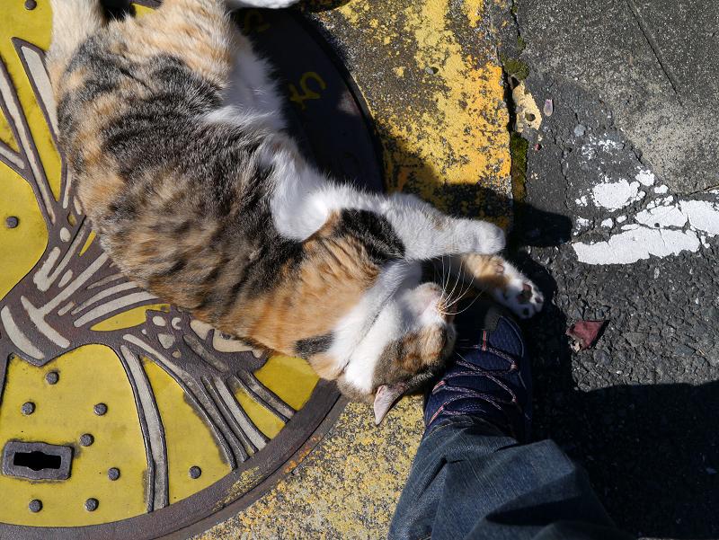 足にしがみつく三毛猫ハイアングル1