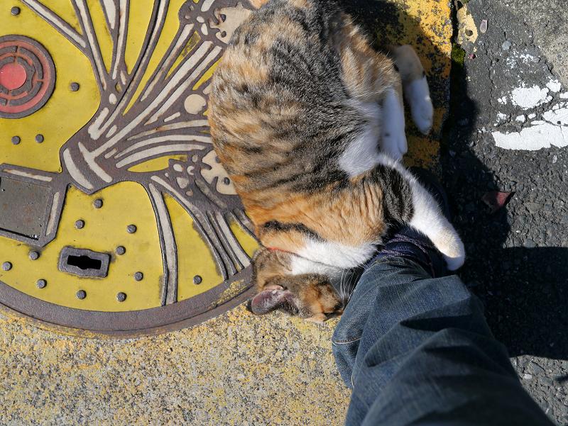 足にしがみつく三毛猫ハイアングル4