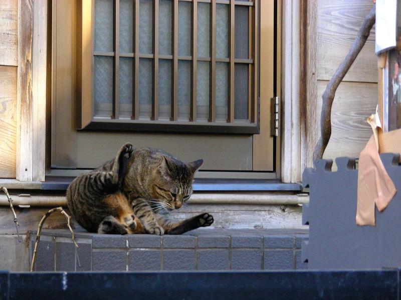 玄関とキジトラ猫1
