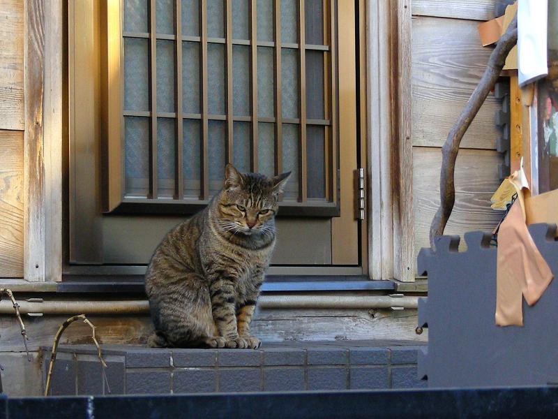 玄関とキジトラ猫2