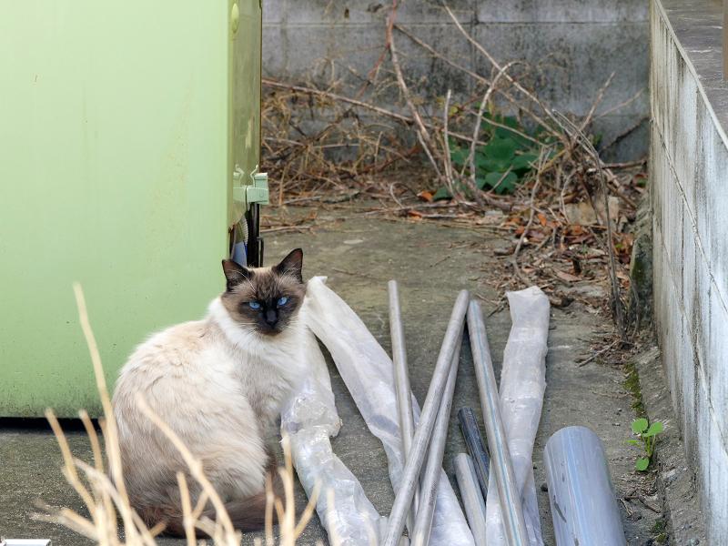 民家資材置き場の猫たち1
