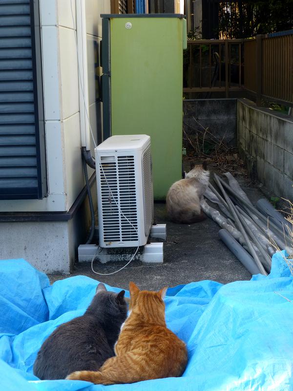 民家資材置き場の猫たち2