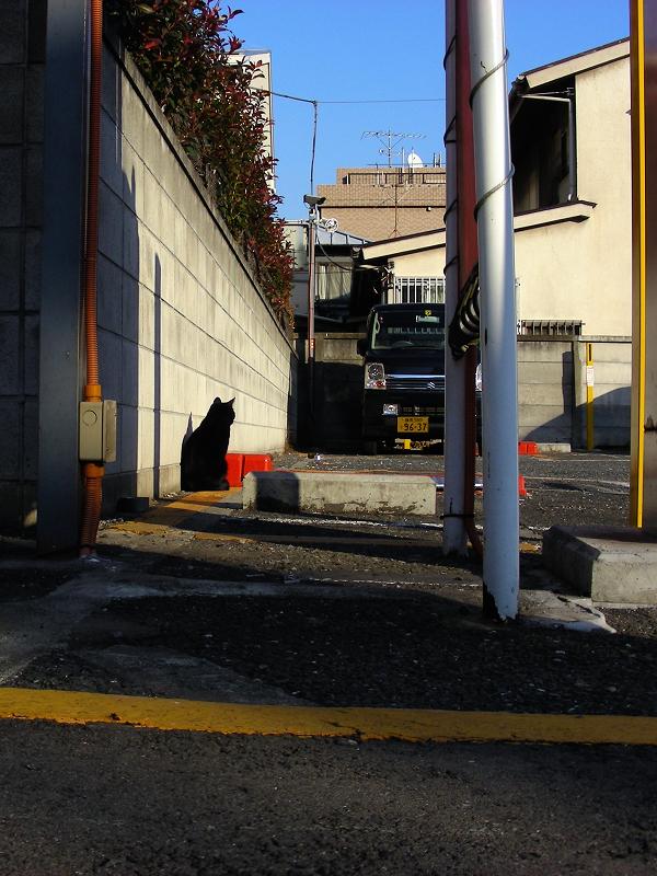 コインパーキングの黒猫1