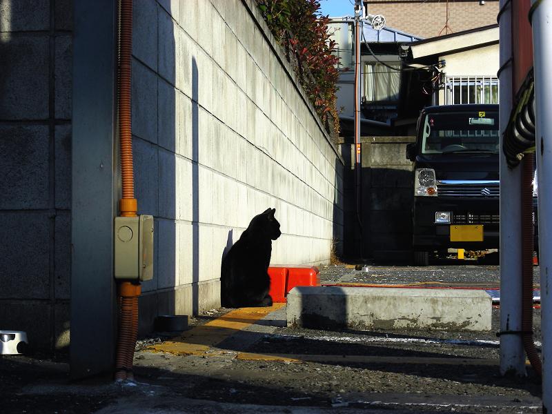 コインパーキングの黒猫2