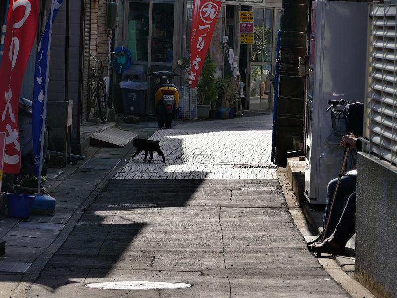 島の路地猫