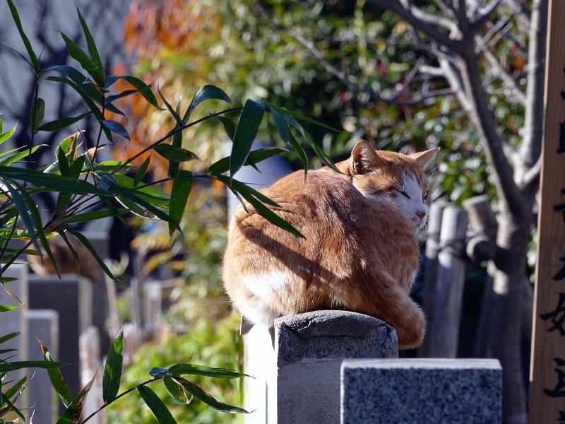 墓石上の茶白猫2