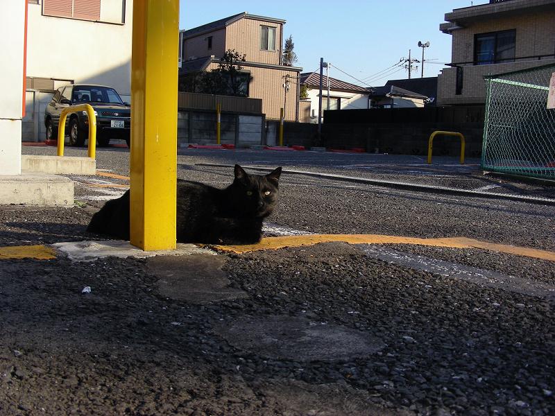 コインパーキング黄色い棒と黒猫1