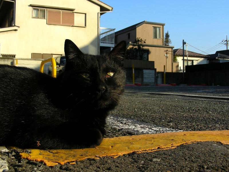 コインパーキング黄色い棒と黒猫2