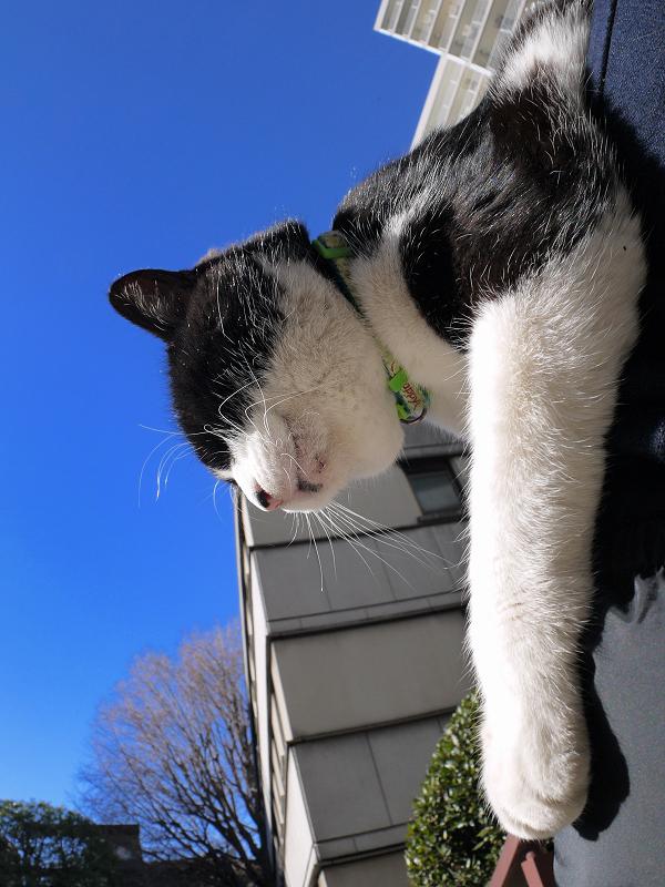 青空の下で膝に乗る黒白猫2