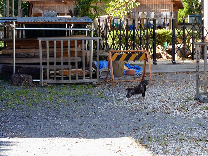 砂利駐車場から歩き去る猫1